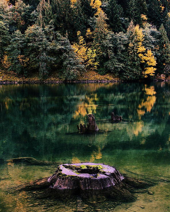North Cascades National Park Poster featuring the photograph Diablo Lake Tree Stump by Benjamin Yeager