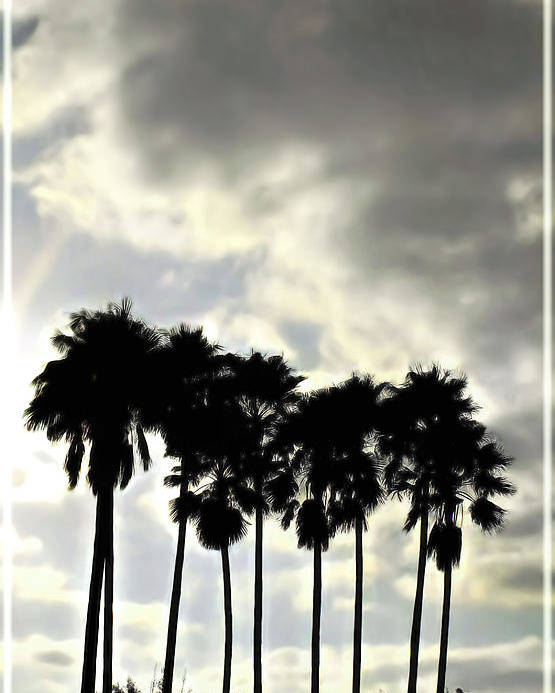 Palm Shadows Poster featuring the digital art Disney's Epcot Palm Trees by Joan Minchak