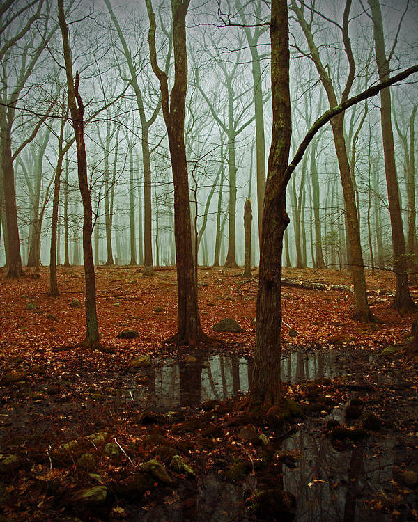 Woods Poster featuring the photograph Do We Dare Go Into The Woods by Karol Livote