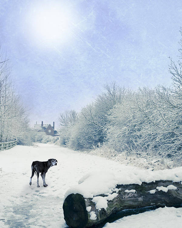 Alone Poster featuring the photograph Dog Looking Back by Amanda Elwell