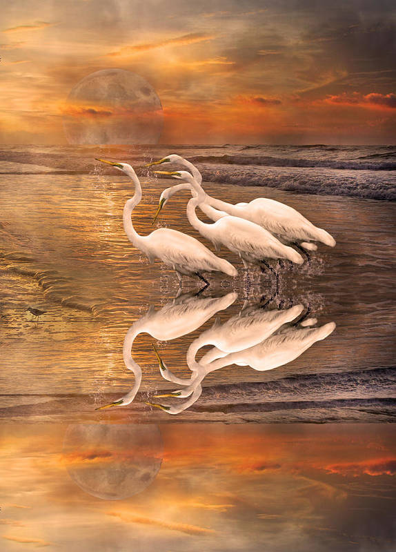 White Poster featuring the digital art Dreaming Of Egrets By The Sea Reflection by Betsy Knapp