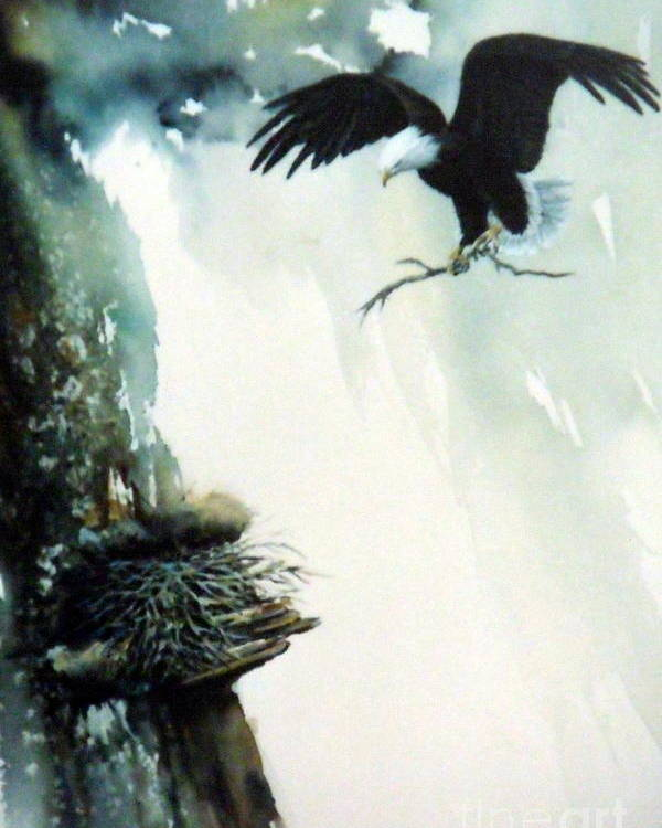 Eagle With Branch Poster featuring the painting Eagle building Nest. by Lynne Parker
