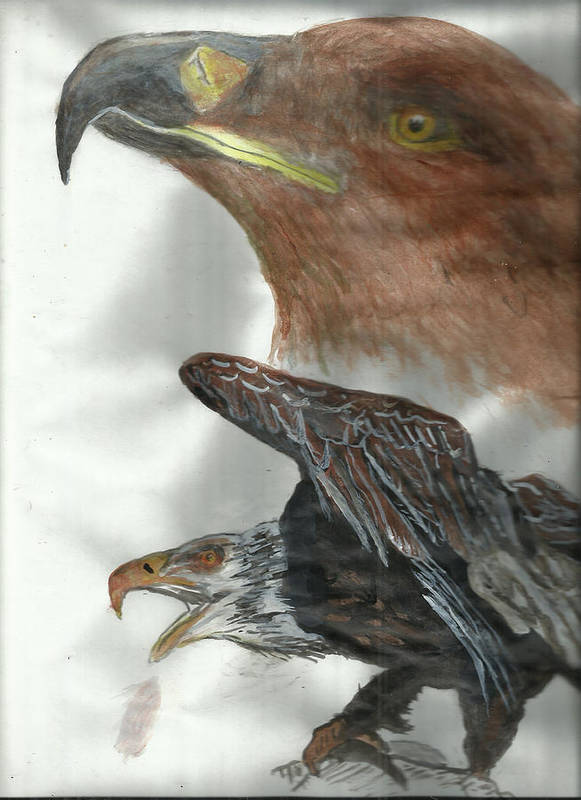 Eagle Poster featuring the painting Eagle by Liberman Magaya