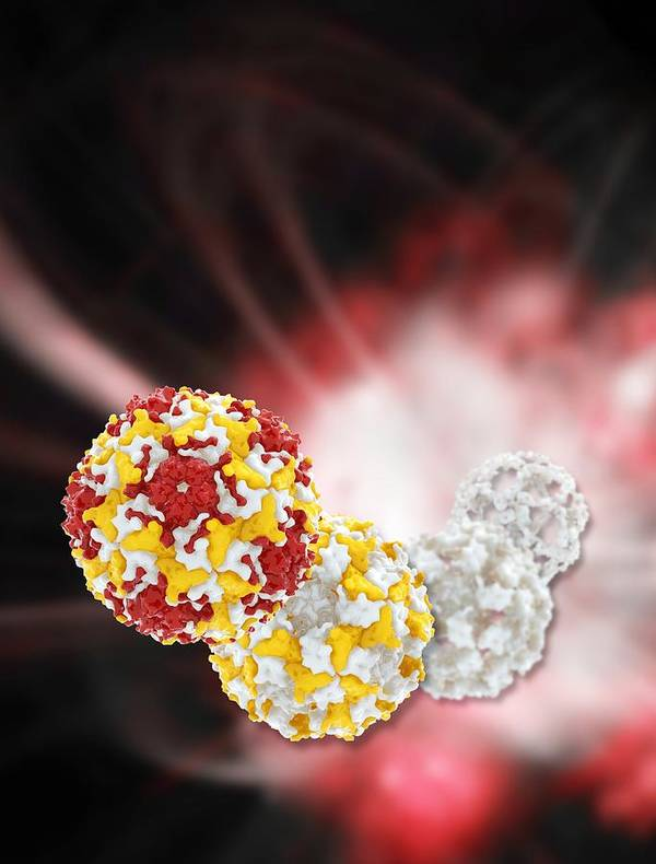 Artwork Poster featuring the photograph Enterovirus Capsid Proteins Structure by Science Photo Library