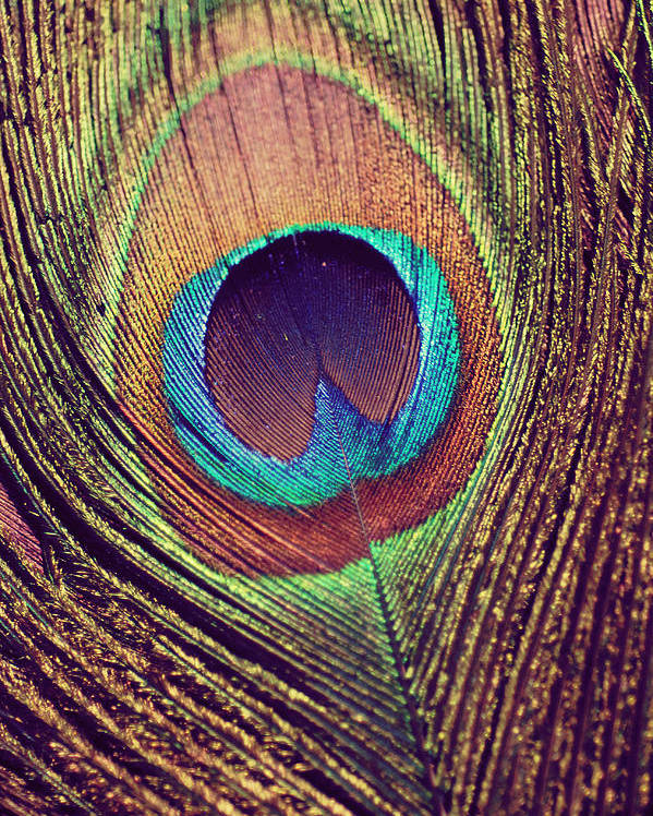 Peacock Poster featuring the photograph Peacock feather by Nastasia Cook