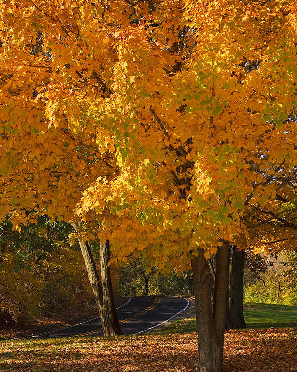 3scape Photos Poster featuring the photograph Fall Colors by Adam Romanowicz