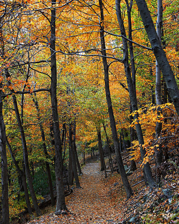 Autumn Poster featuring the photograph Fall Foliage Colors 03 by Metro DC Photography