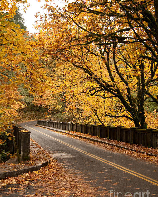 Fall Poster featuring the photograph Fall Foliage On The Highway by Cari Gesch