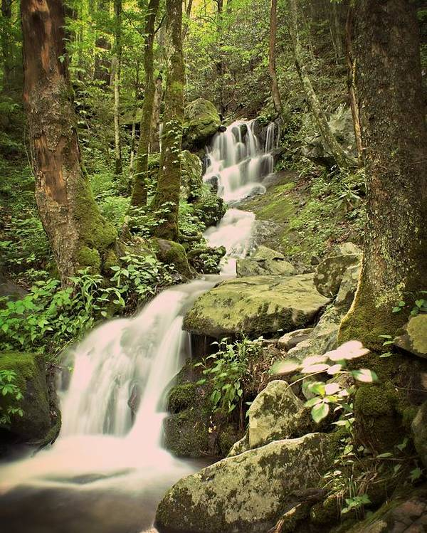 Waterfall Poster featuring the photograph Falls In The Smokies by Marty Koch
