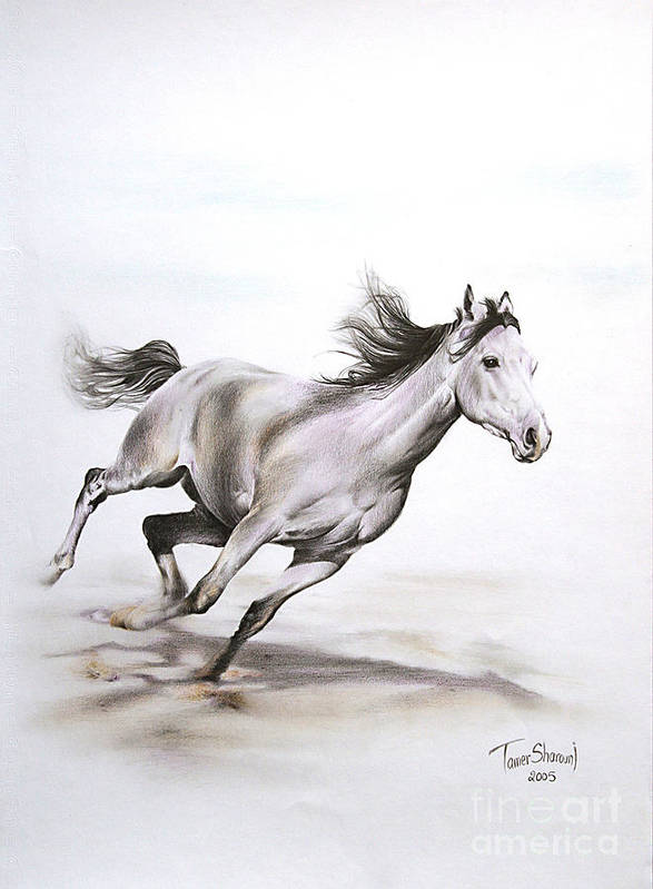 Horse Poster featuring the drawing Fast In The Spirit by Tamer and Cindy Elsharouni