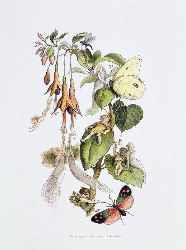 Fairy Poster featuring the painting Feasting And Fun Among The Fuschias by Richard Doyle