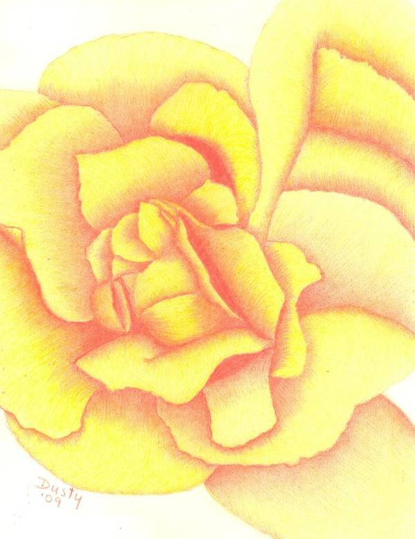 Rose Poster featuring the drawing Flaming Yellow Rose by Dusty Reed
