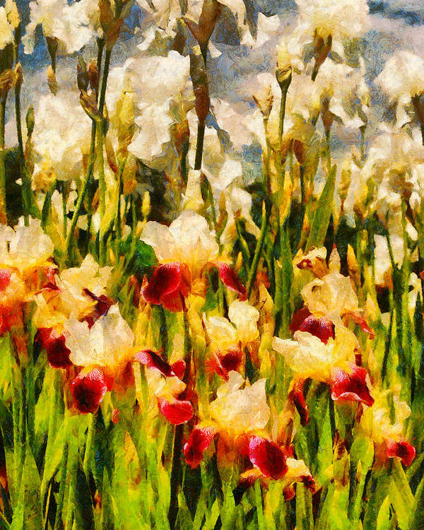 Iris Poster featuring the digital art Flower - Iris - Mildred Presby 1923 by Mike Savad