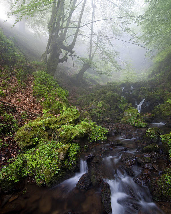 Landscape Poster featuring the photograph Fog In The Forest by Marilar Irastorza