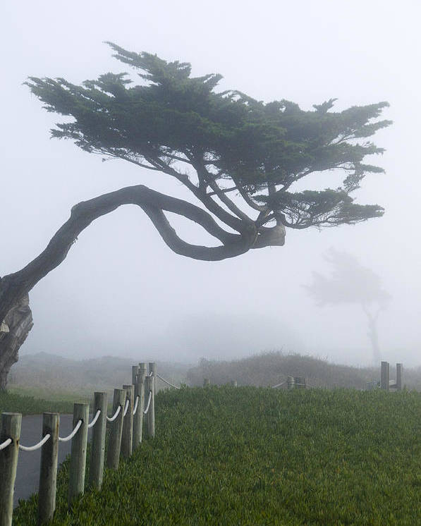 Fogscape Poster featuring the photograph Foggy Coastal Trail In Miramar by Scott Lenhart