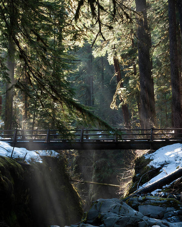 Art Wolfe Poster featuring the photograph Footbridge Near Sol Duc Falls, Olympic by Art Wolfe