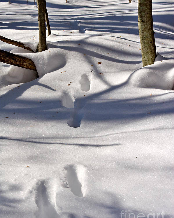 Landscape Poster featuring the photograph Footprints In The Snow by Louise Heusinkveld