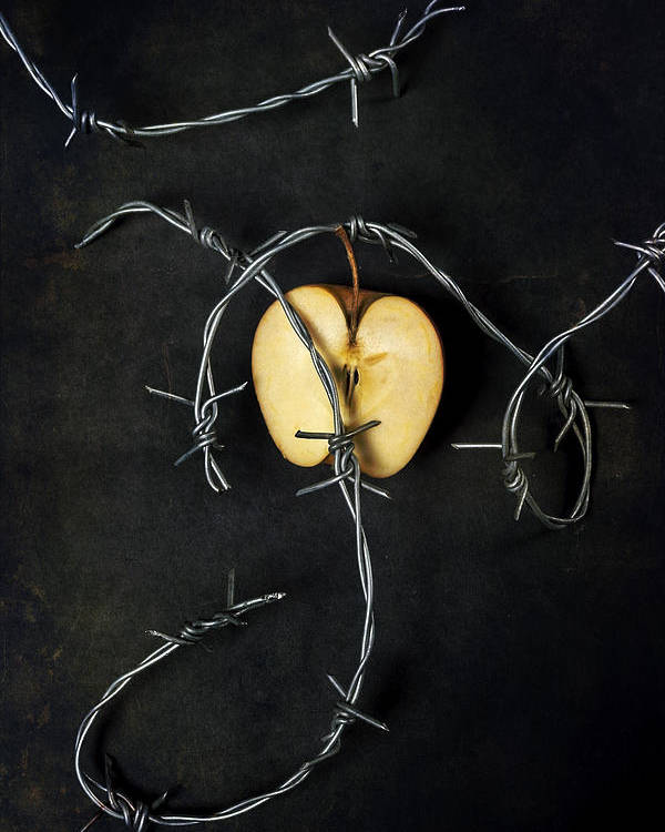 Wire Poster featuring the photograph Forbidden Fruit by Joana Kruse