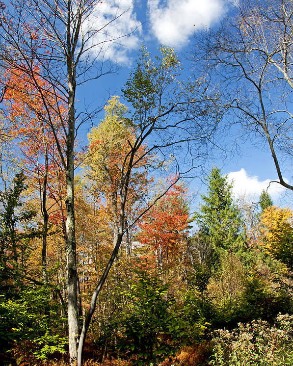 Pennsylvania Poster featuring the photograph Forest Edge Autumn Pocono Mountains Pennsylvania by A Gurmankin
