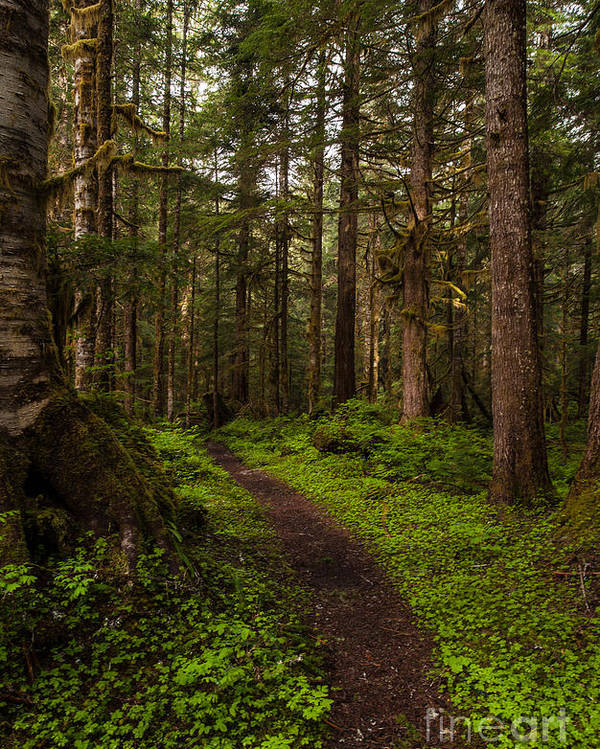 Northwest Poster featuring the photograph Forest Serenity Path by Mike Reid