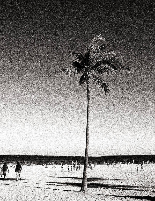 Palm Tree Poster featuring the digital art Fort Lauderdale Palm Tree by Phil Perkins