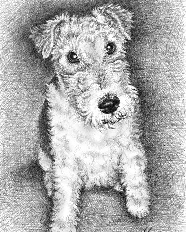 Dog Poster featuring the drawing Foxterrier by Nicole Zeug