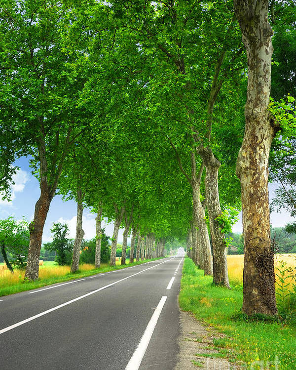 Road Poster featuring the photograph French Country Road by Elena Elisseeva
