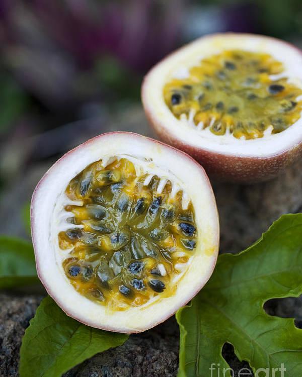 Hawaii Poster featuring the photograph Fresh Cut Lilikoi Fruit by Charmian Vistaunet