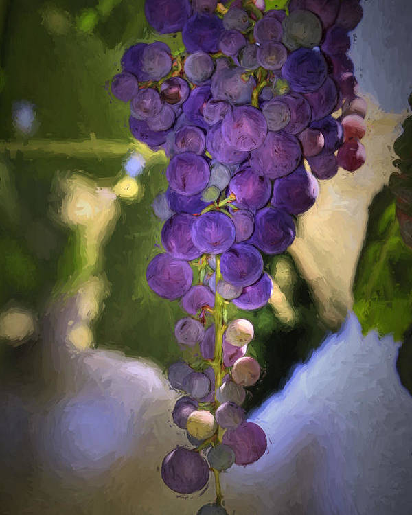 Grape Poster featuring the photograph Fruit Of The Vine by Donna Kennedy