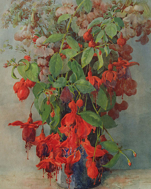 Fuchsia And Snapdragon In A Vase Poster featuring the painting Fushia And Snapdragon In A Vase by William Jordan