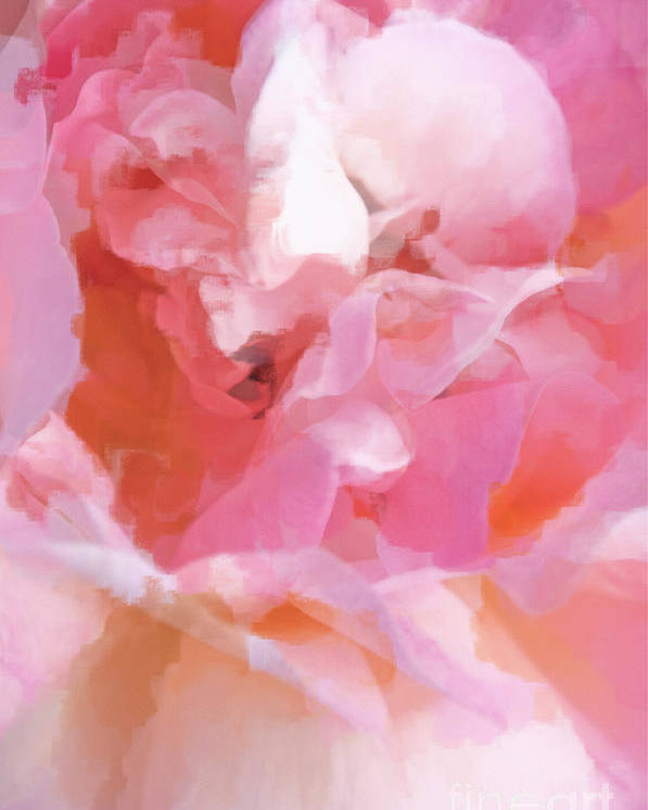 Rose Poster featuring the photograph Garden Ballet by Gwyn Newcombe