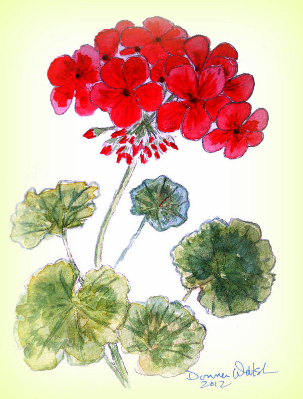 Geranium Poster featuring the painting Geranium by Donna Walsh