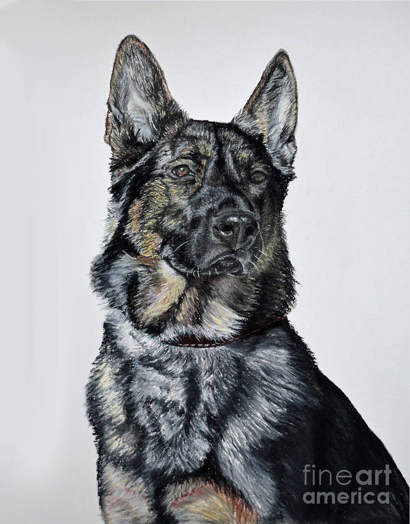 Pet Portraits Poster featuring the pastel German Shepherd Bodhi by Ann Marie Chaffin