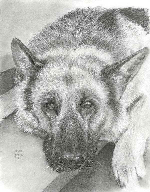 German Shepherd Poster featuring the drawing German Shepherd by Heather Gessell