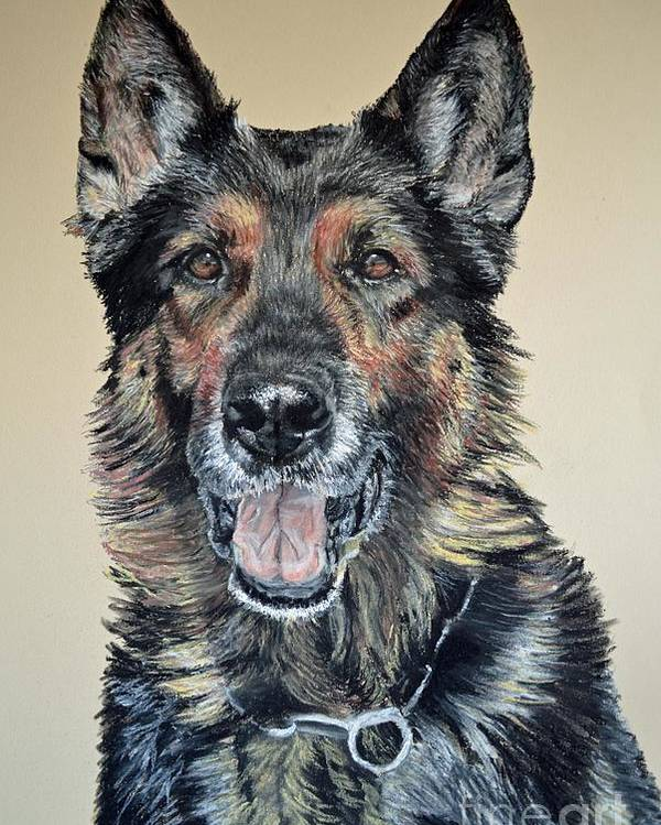 Schutzhund Poster featuring the pastel German Shepherd Jim by Ann Marie Chaffin