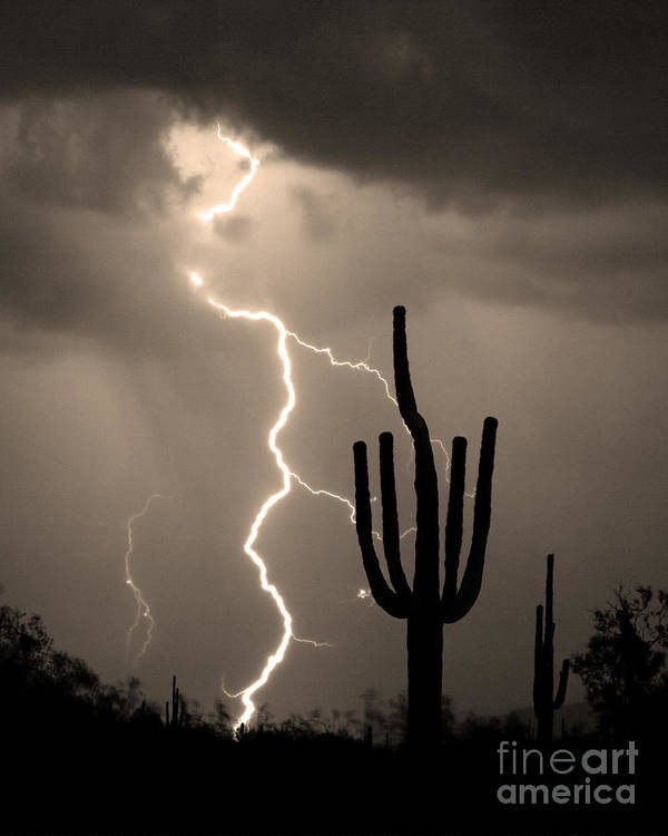 Weather Poster featuring the photograph Giant Saguaro Cactus Lightning Strike Sepia by James BO Insogna