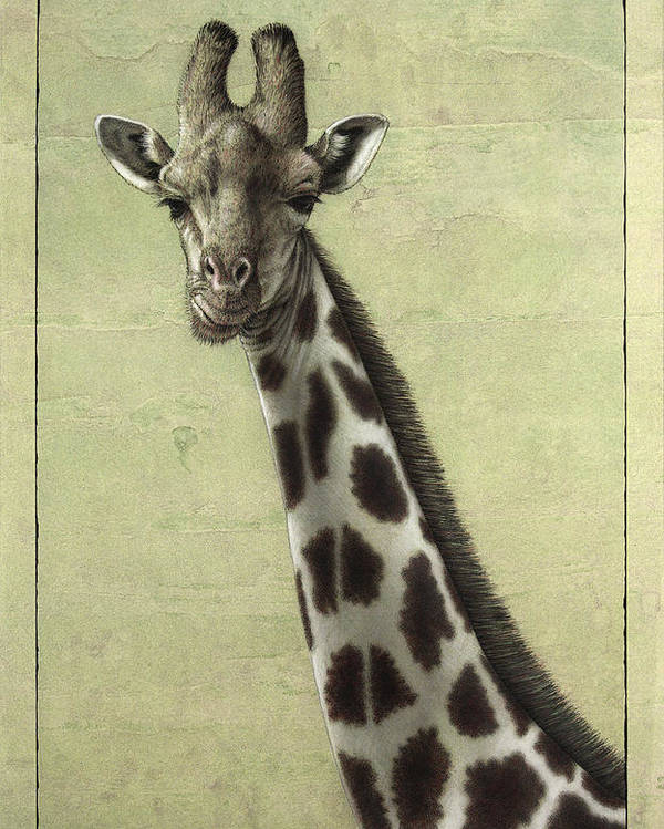 Giraffe Poster featuring the painting Giraffe by James W Johnson