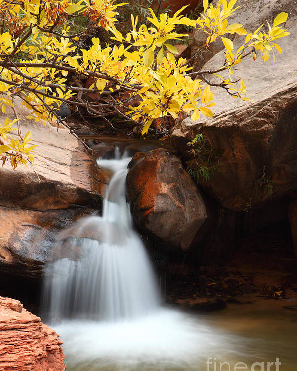 Landscape Poster featuring the photograph Golden Fall by Bill Singleton