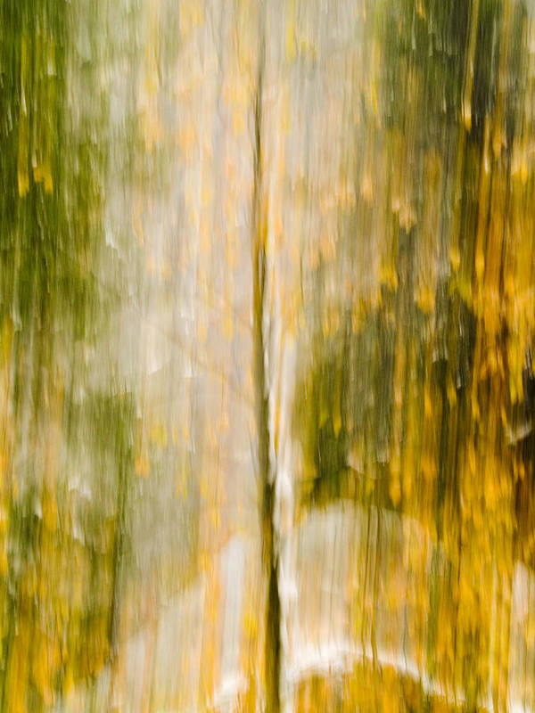 Trees Poster featuring the photograph Golden Falls by Bill Gallagher