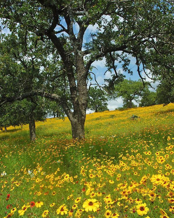 Wildflowers Poster featuring the photograph Golden Hillside by Robert Anschutz