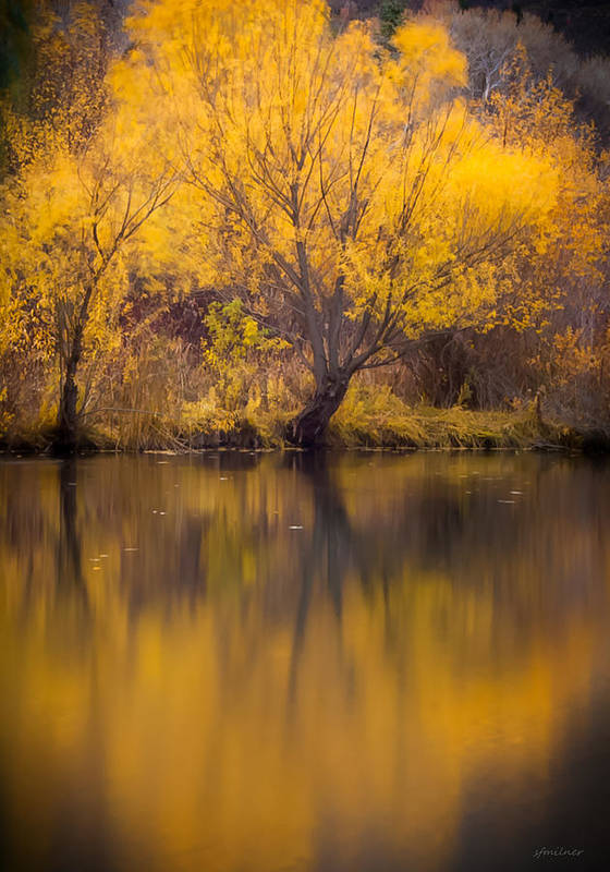 Autumn Poster featuring the photograph Golden Pond by Steven Milner