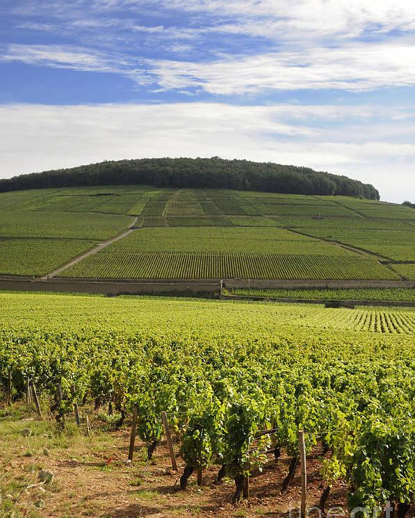 Agriculture  Poster featuring the photograph Grand Cru And Premier Cru Vineyards Of Aloxe Corton. Cote De Beaune. Burgundy. France. Europe. by Bernard Jaubert