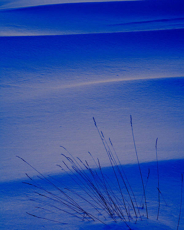 Chilly Poster featuring the photograph Grasses And Twilight Snow Drifts by Irwin Barrett