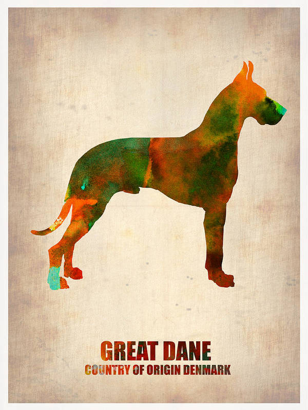 Great Dane Poster featuring the painting Great Dane Poster by Naxart Studio