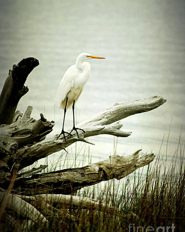 Bird Poster featuring the photograph Great Egret On A Fallen Tree by Joan McCool
