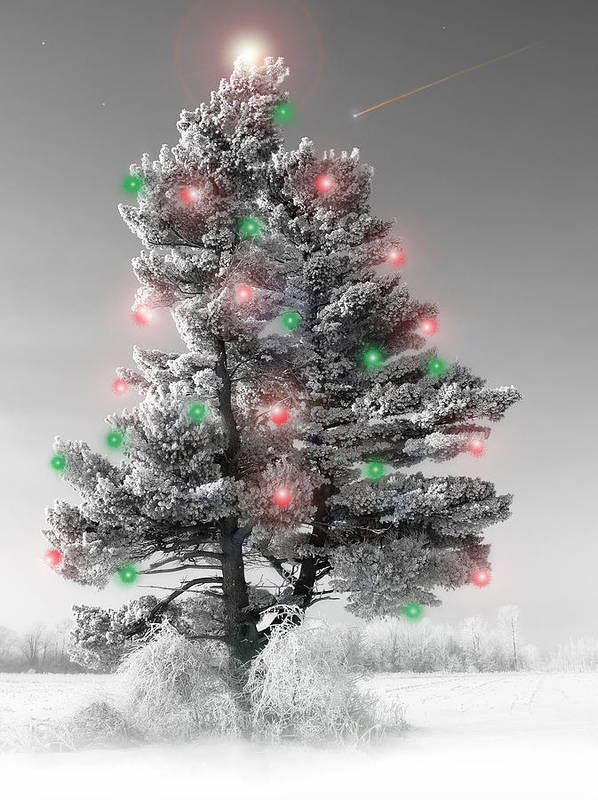 Christmas Tree.pine Poster featuring the photograph Great White Christmas Pine by John Bartosik