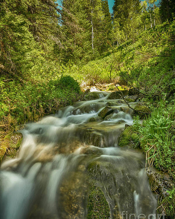 Usa Poster featuring the photograph Green Colors And A Stream Hdr by Mitch Johanson