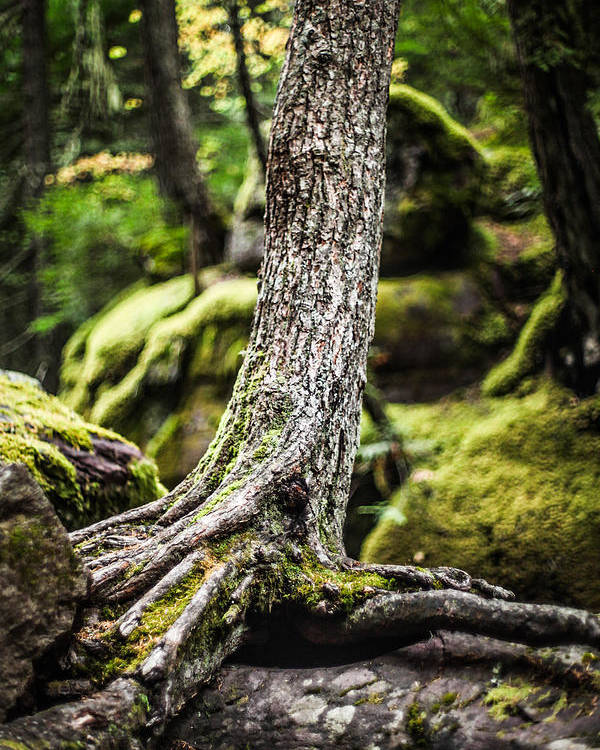 Tree Poster featuring the photograph Green Forest by Aaron Aldrich
