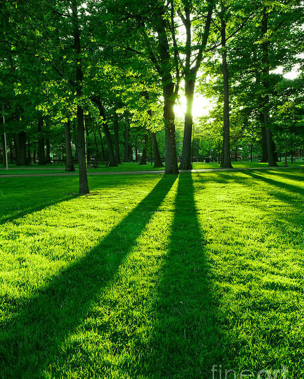 Park Poster featuring the photograph Green park with setting sun by Elena Elisseeva