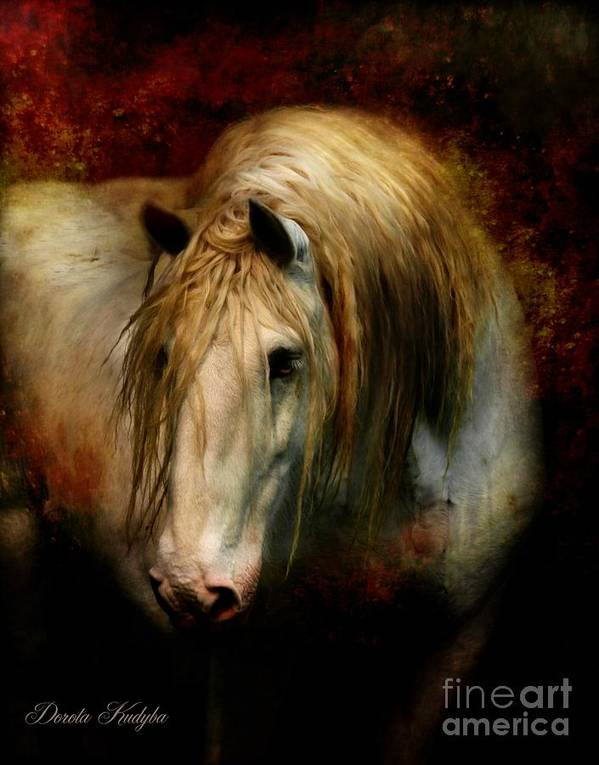 Horse Poster featuring the photograph Grey Dignity by Dorota Kudyba